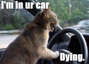 cat-in-a--car